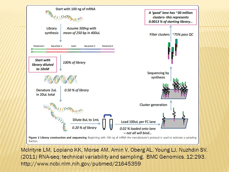 McIntyre LM, Lopiano KK, Morse AM, Amin V, Oberg AL, Young LJ, Nuzhdin SV. (2011) RNA-seq: technical variability and sampling. BMC Genomics. 12:293. h