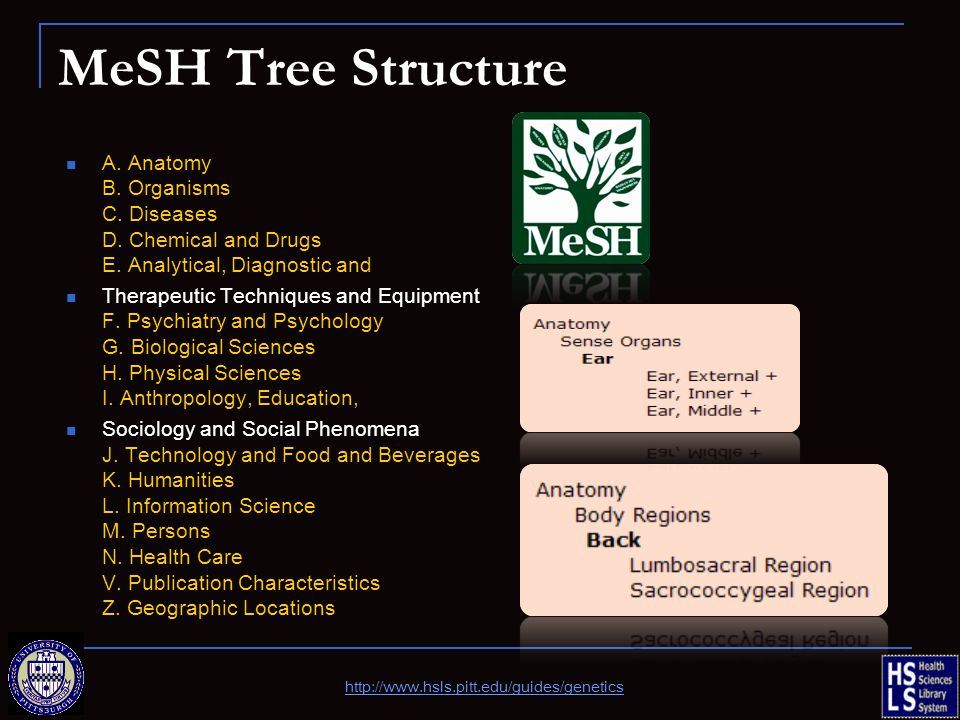 MeSH Tree Structure A. Anatomy B. Organisms C. Diseases D.