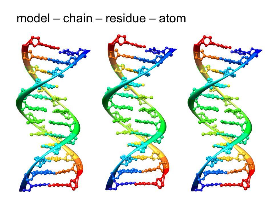model – chain – residue – atom