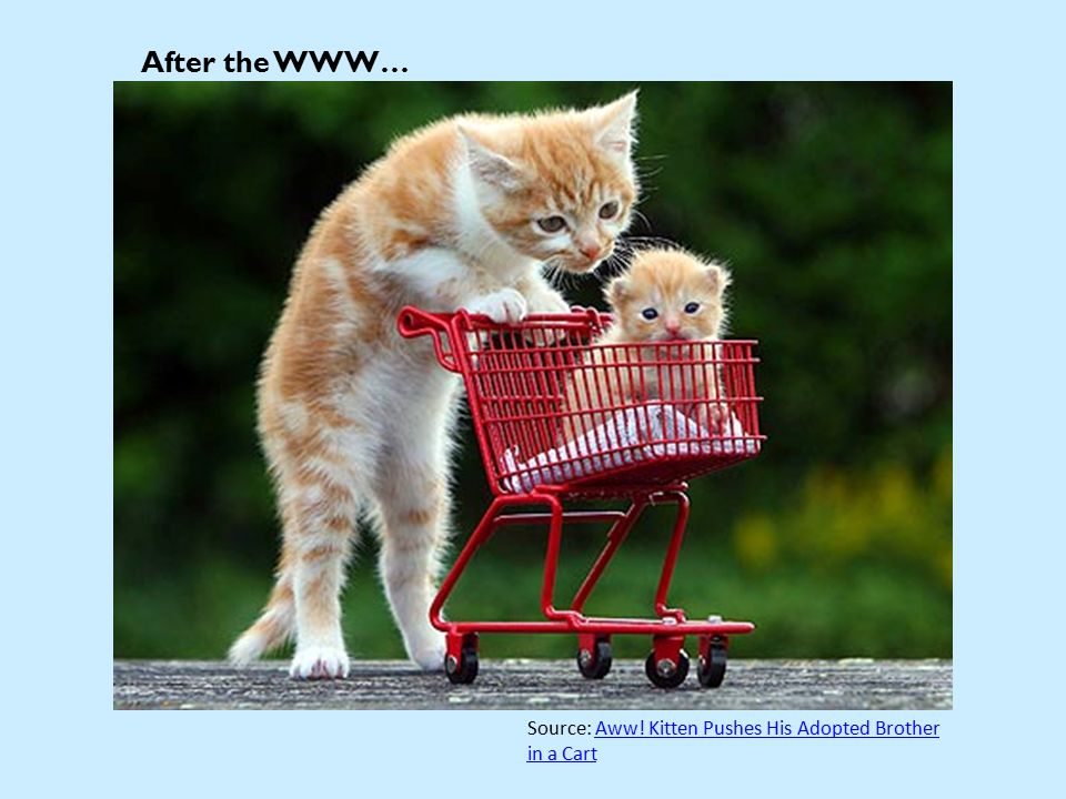 After the WWW… Source: Aww. Kitten Pushes His Adopted Brother in a CartAww.