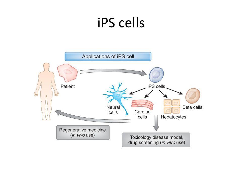 iPS cells