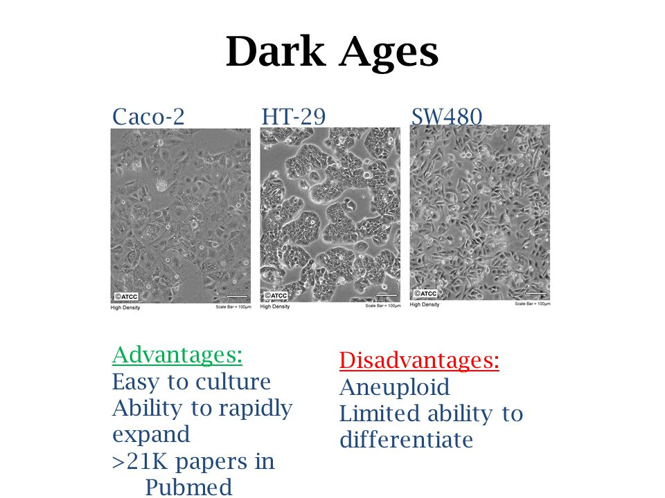 Dark Ages Caco-2HT-29SW480 Advantages: Easy to culture Ability to rapidly expand >21K papers in Pubmed Disadvantages: Aneuploid Limited ability to differentiate