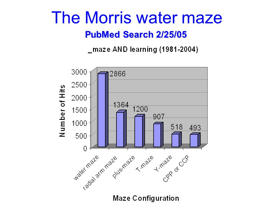 The Morris water maze Updated 2/29/09 Updated today: 5,175