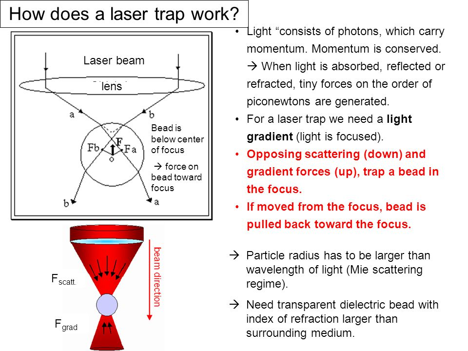 How does a laser trap work.Light consists of photons, which carry momentum.