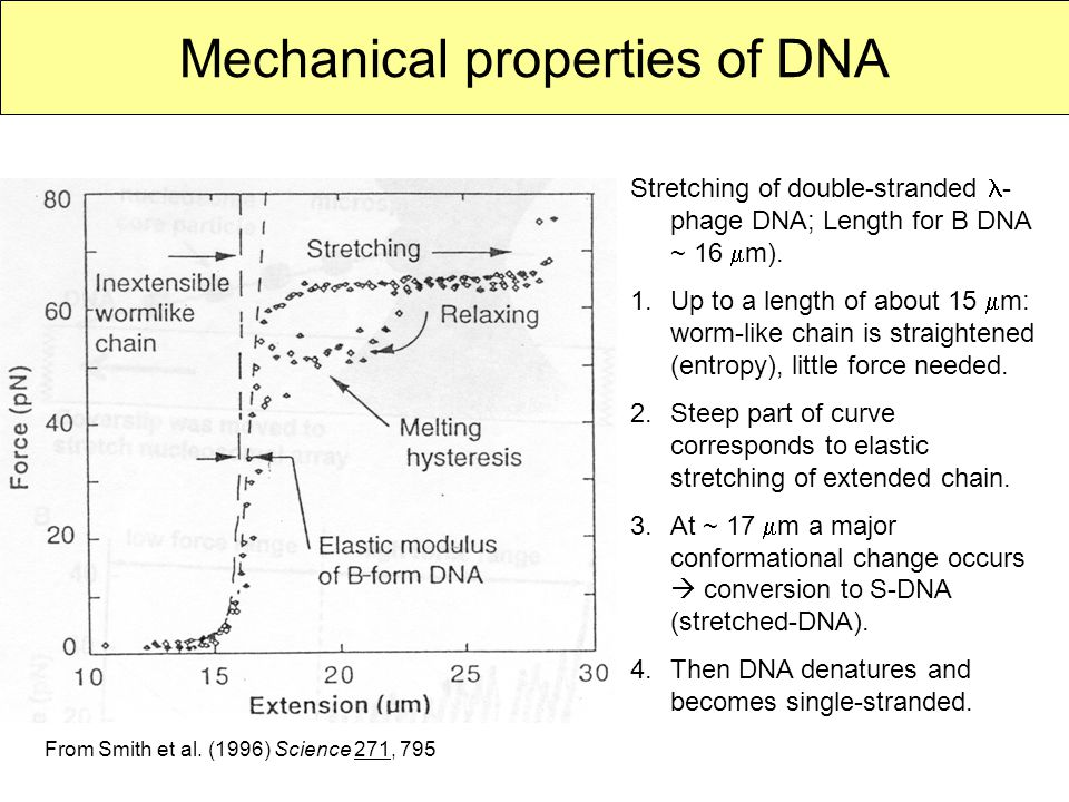 Mechanical properties of DNA Stretching of double-stranded - phage DNA; Length for B DNA ~ 16  m).