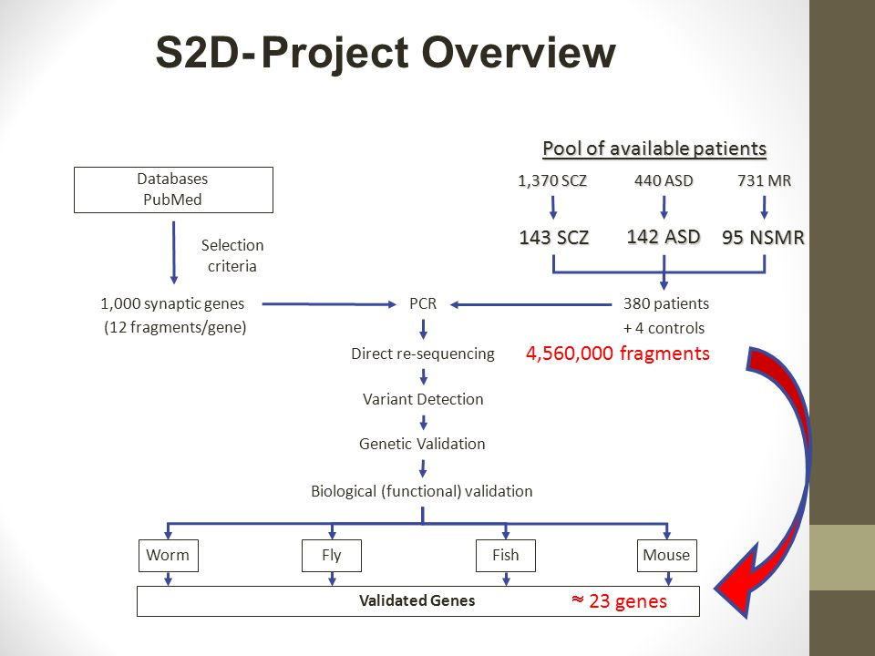S2D- Project Overview 1,000 synaptic genes 380 patients Direct re-sequencing Biological (functional) validation Genetic Validation Validated Genes PCR Variant Detection + 4 controls (12 fragments/gene) Worm Fly Fish Mouse Databases PubMed Selection criteria 4,560,000 fragments  23 genes 143 SCZ 142 ASD 1,370 SCZ 440 ASD Pool of available patients 95 NSMR 731 MR