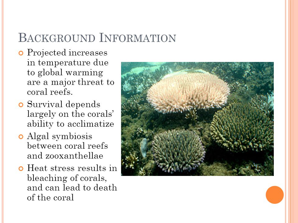 B ACKGROUND I NFORMATION Projected increases in temperature due to global warming are a major threat to coral reefs. Survival depends largely on the c