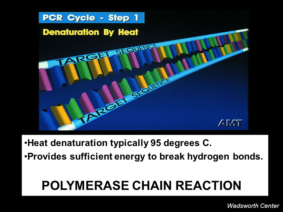 Heat denaturation typically 95 degrees C. Provides sufficient energy to break hydrogen bonds.