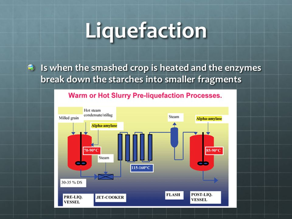 Liquefaction Is when the smashed crop is heated and the enzymes break down the starches into smaller fragments