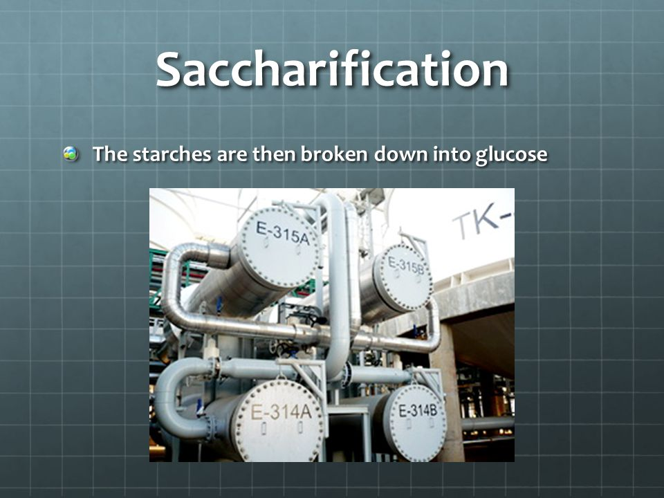 Saccharification The starches are then broken down into glucose