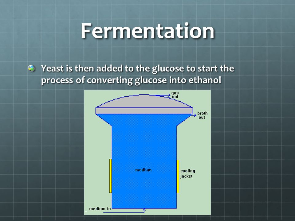 Fermentation Yeast is then added to the glucose to start the process of converting glucose into ethanol