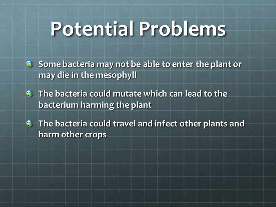 Potential Problems Some bacteria may not be able to enter the plant or may die in the mesophyll The bacteria could mutate which can lead to the bacterium harming the plant The bacteria could travel and infect other plants and harm other crops