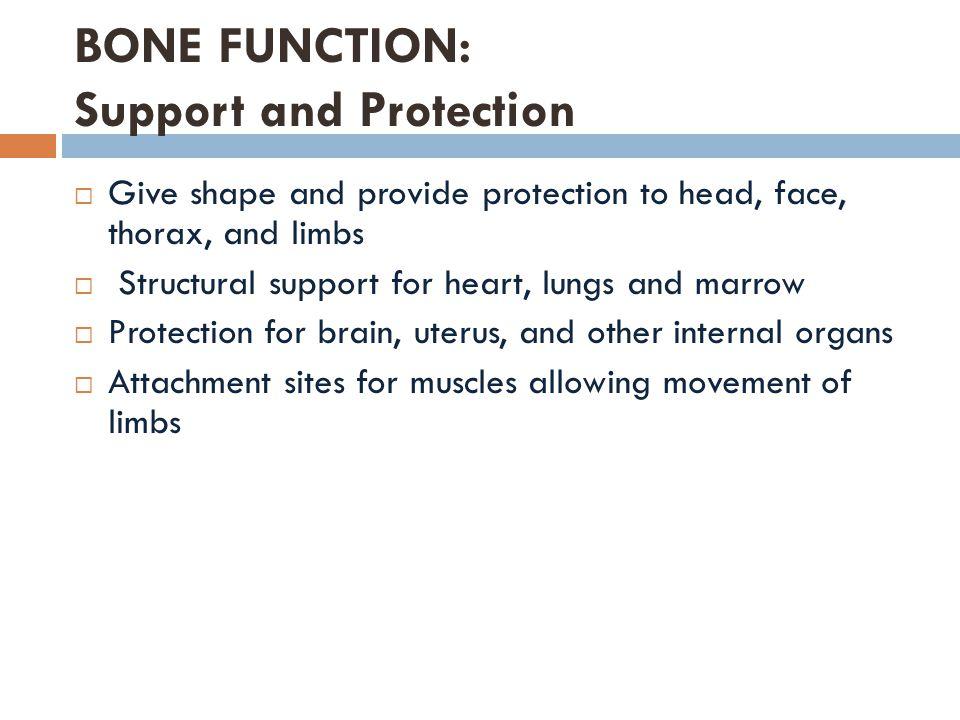 Bone Tumor  Abnormal growth of bones  Genetics, radiation, injury  Symptoms: Pain (night) and fractures  Treated like most cancers http://www.magmire.net/wp-content/uploads/Dog-Bone-Tumors.jpg