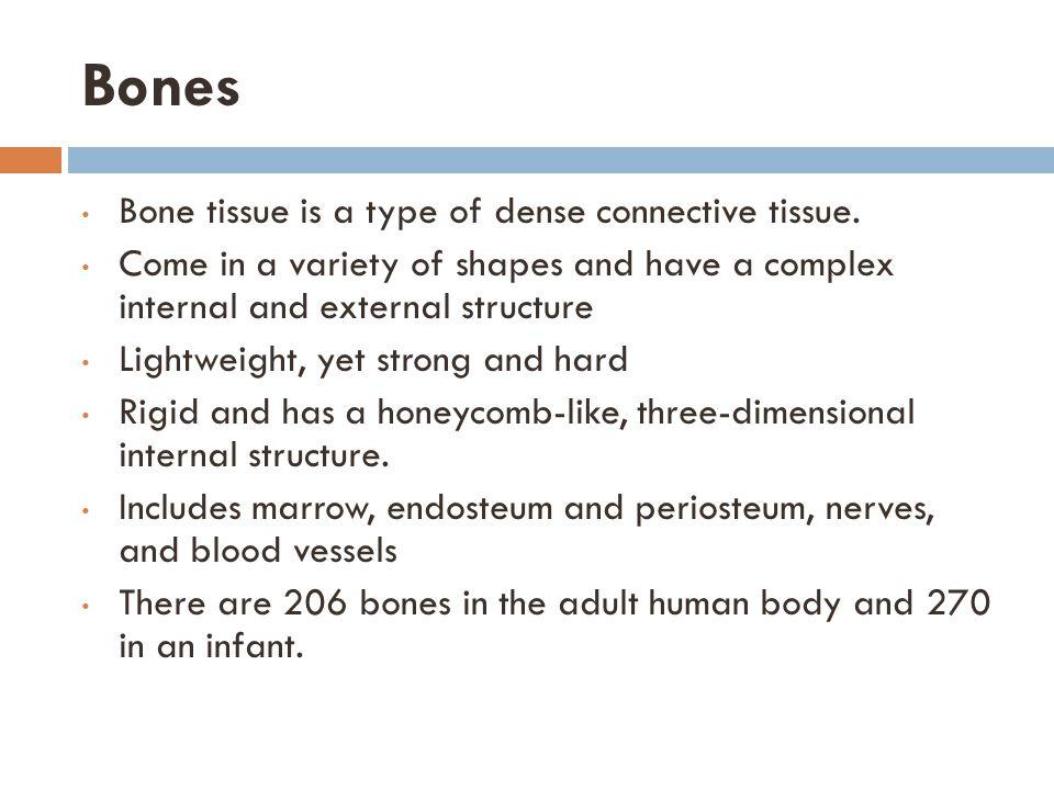 Major Bones of the Body: Posterior View Scapula Sacrum Coccyx Floating RibsVertebral Column http://www.clker.com/clipart-skeleton- posterior.html