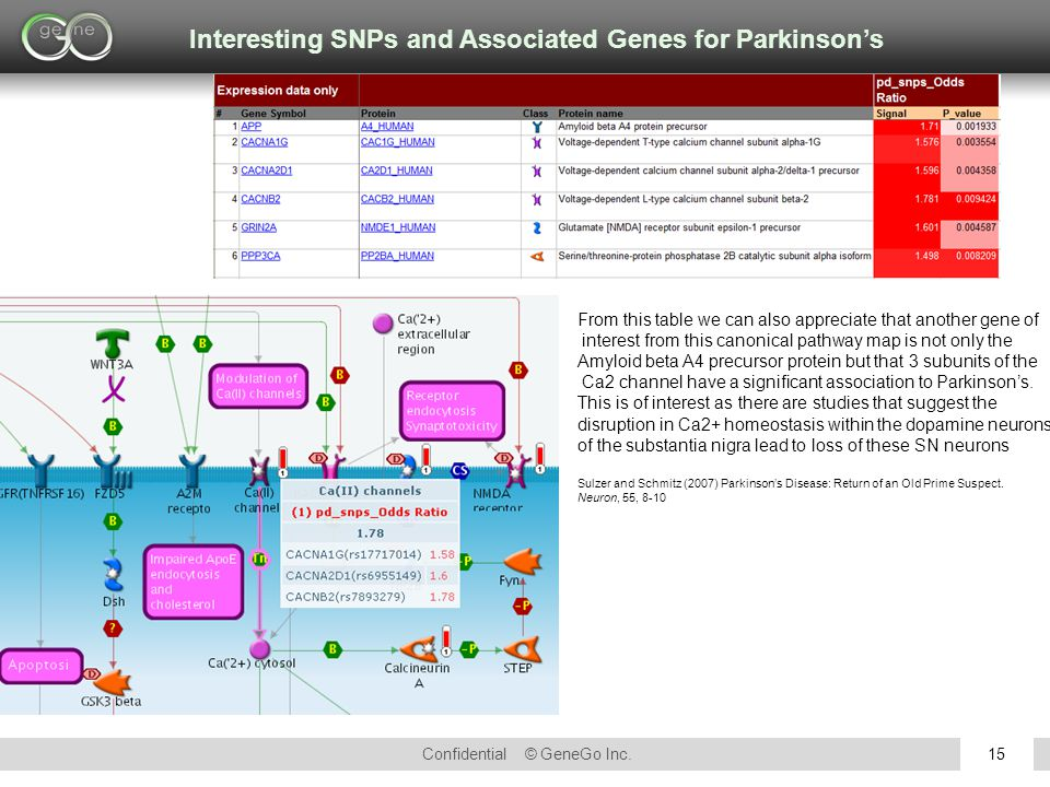 Confidential © GeneGo Inc.15 From this table we can also appreciate that another gene of interest from this canonical pathway map is not only the Amyl