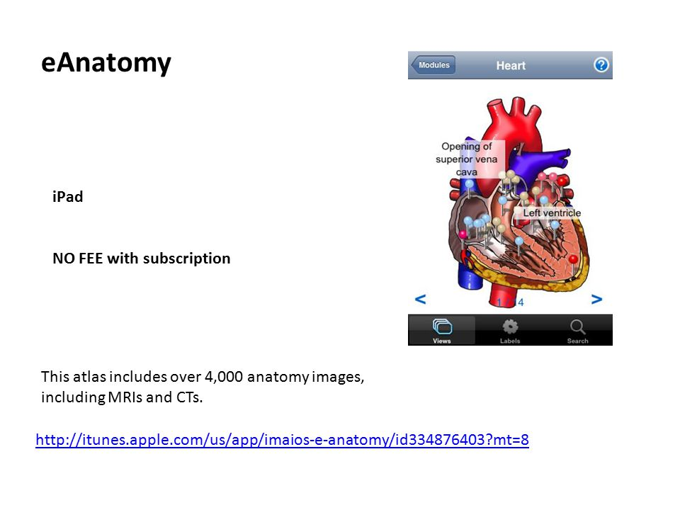 eAnatomy iPad NO FEE with subscription http://itunes.apple.com/us/app/imaios-e-anatomy/id334876403?mt=8 This atlas includes over 4,000 anatomy images, including MRIs and CTs.