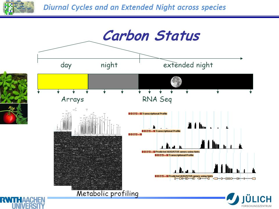 Carbon Status ArraysRNA Seq Metabolic profiling day night extended night Diurnal Cycles and an Extended Night across species