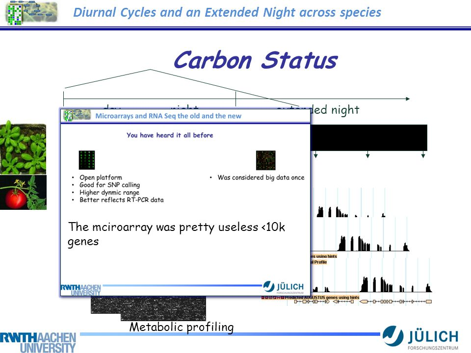 Carbon Status ArraysRNA Seq Metabolic profiling day night extended night Diurnal Cycles and an Extended Night across species The mciroarray was pretty useless <10k genes