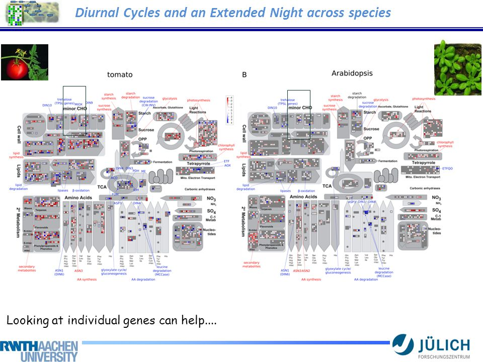 Diurnal Cycles and an Extended Night across species Looking at individual genes can help....