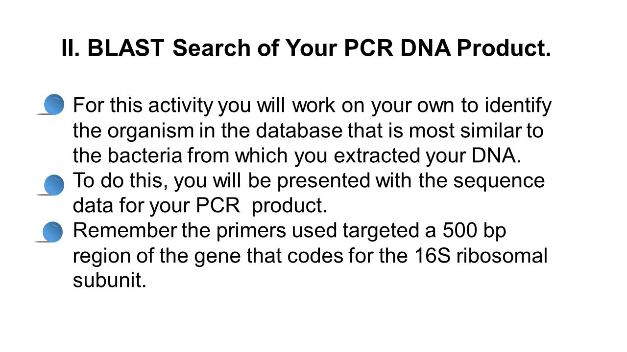 II. BLAST Search of Your PCR DNA Product. For this activity you will work on your own to identify the organism in the database that is most similar to
