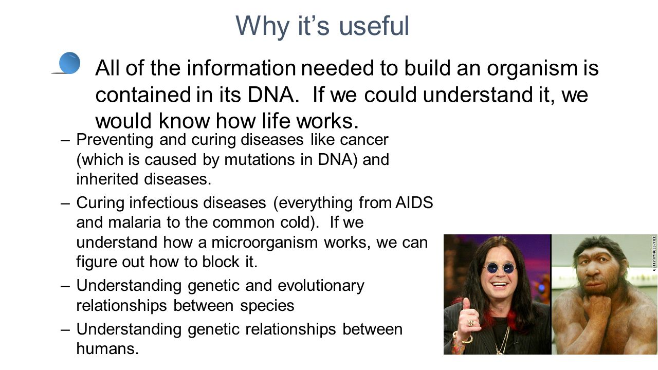 Why it's useful –Preventing and curing diseases like cancer (which is caused by mutations in DNA) and inherited diseases. –Curing infectious diseases
