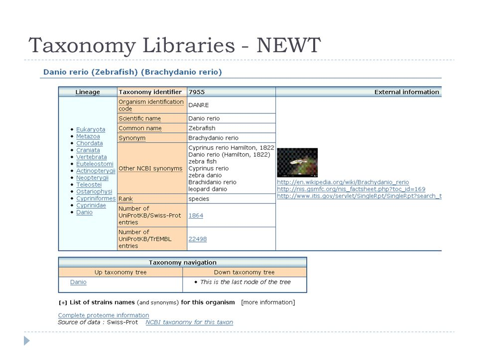 Taxonomy Libraries - NEWT