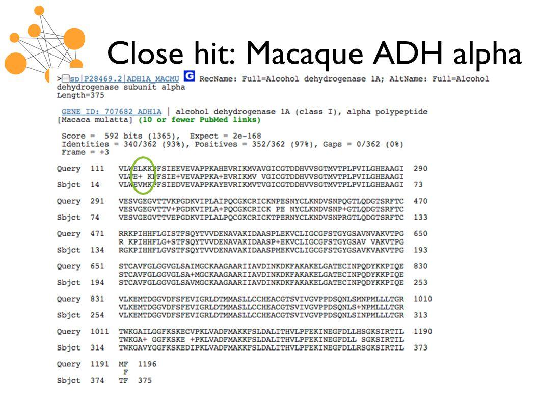 Close hit: Macaque ADH alpha