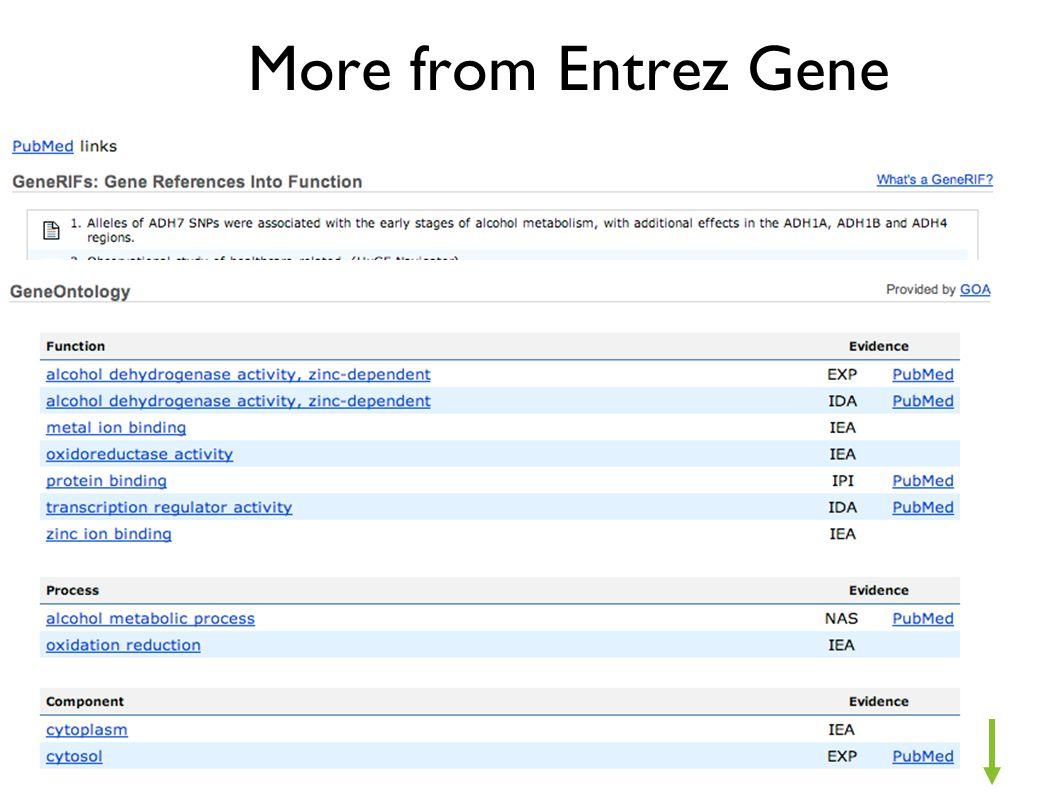 More from Entrez Gene