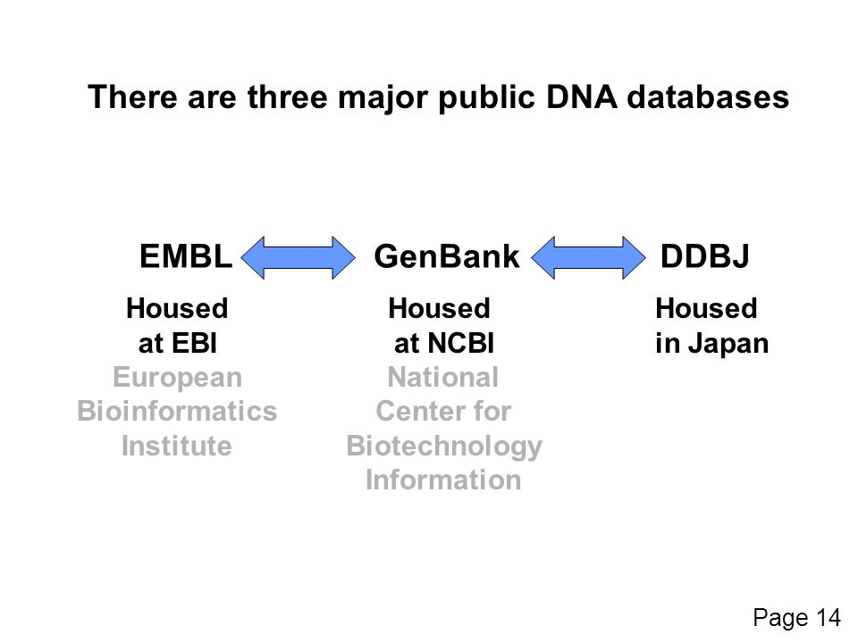 GenBankEMBLDDBJ Housed at EBI European Bioinformatics Institute There are three major public DNA databases Housed at NCBI National Center for Biotechnology Information Housed in Japan Page 14