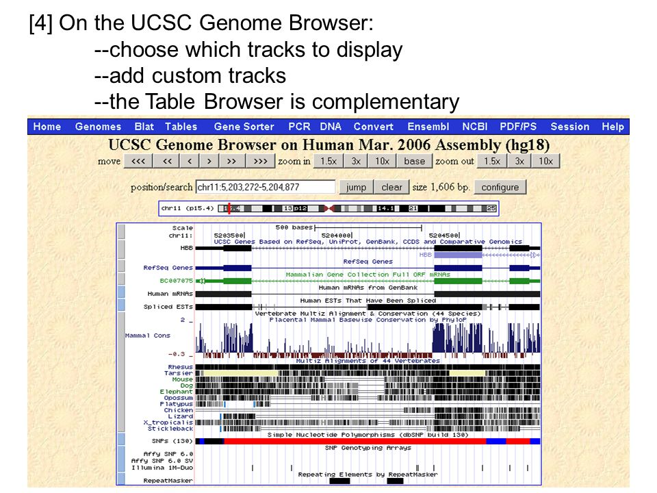 [4] On the UCSC Genome Browser: --choose which tracks to display --add custom tracks --the Table Browser is complementary