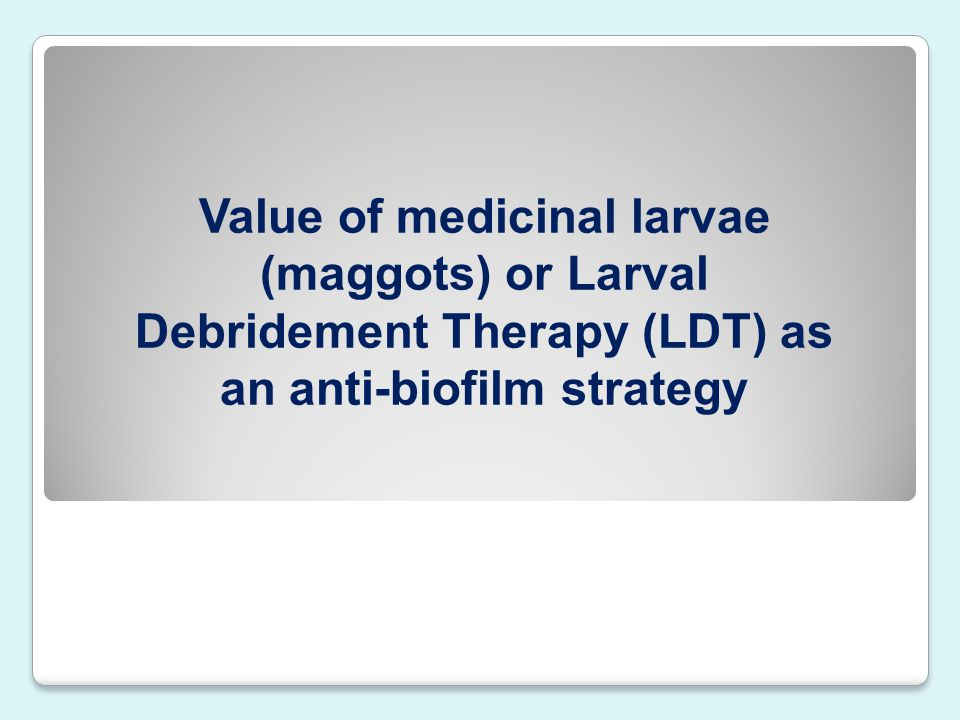 Value of medicinal larvae (maggots) or Larval Debridement Therapy (LDT) as an anti-biofilm strategy