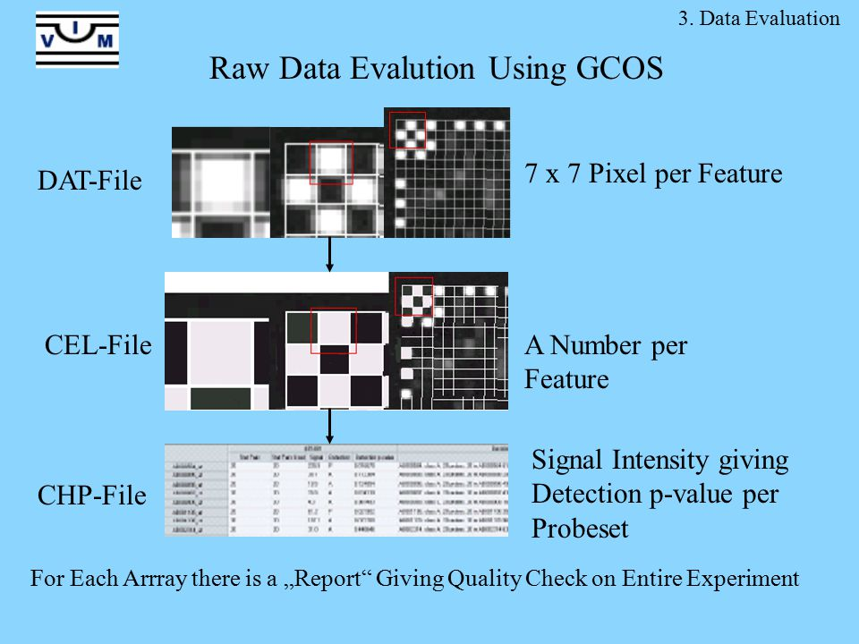 3. Data Evaluation Raw Data Evalution Using GCOS DAT-File CEL-File 7 x 7 Pixel per Feature A Number per Feature Signal Intensity giving Detection p-va