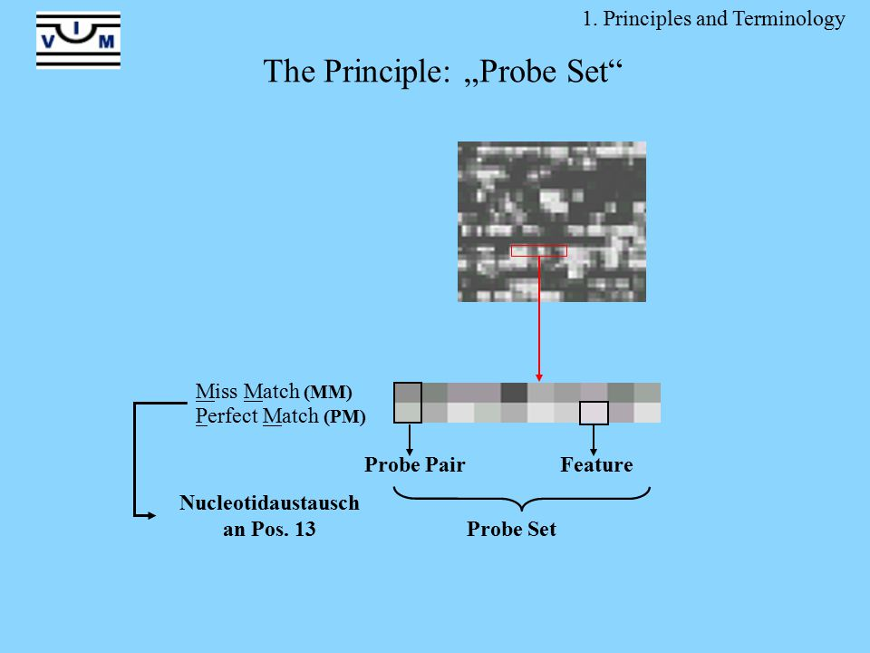 """1. Principles and Terminology Probe Set Probe PairFeature Miss Match (MM) Perfect Match (PM) Nucleotidaustausch an Pos. 13 The Principle: """"Probe Set"""""""