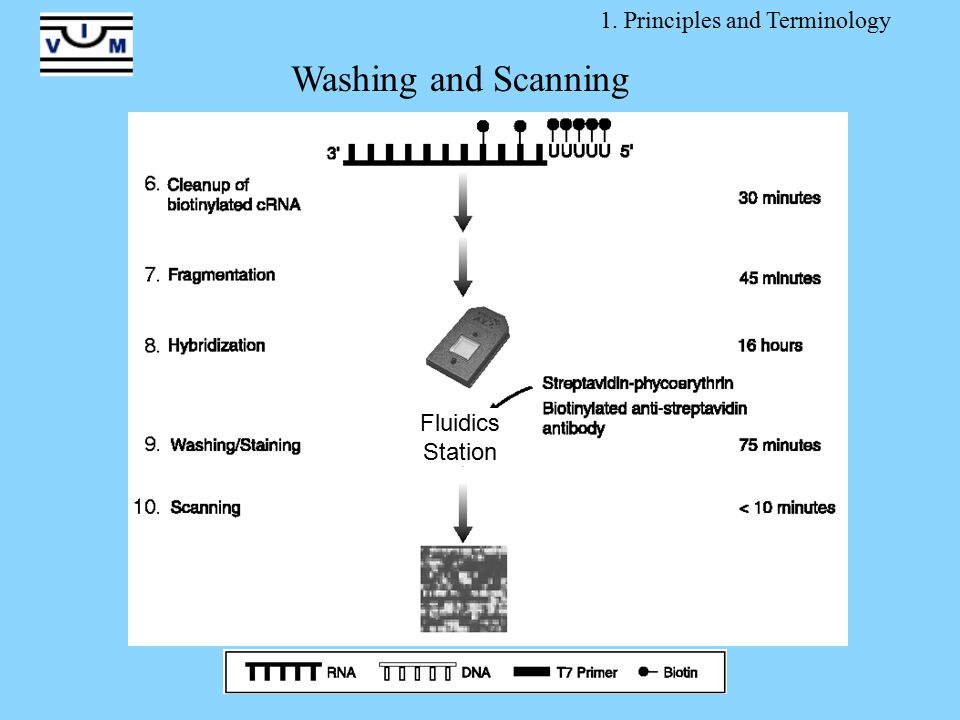 Fluidics Station 1. Principles and Terminology Washing and Scanning