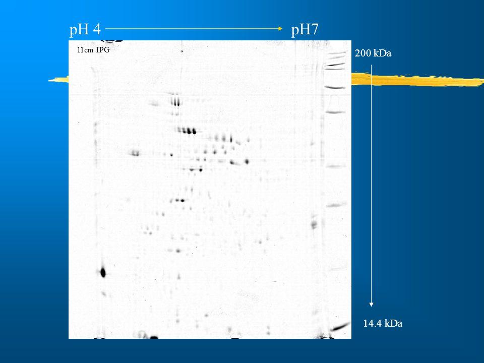 pH 4 pH7 200 kDa 14.4 kDa 11cm IPG