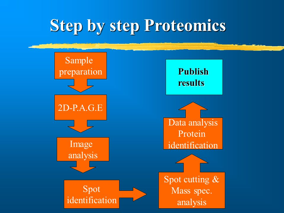 Iso- Electric Focusing In the 1 st dimension, proteins are separated according to their charge.