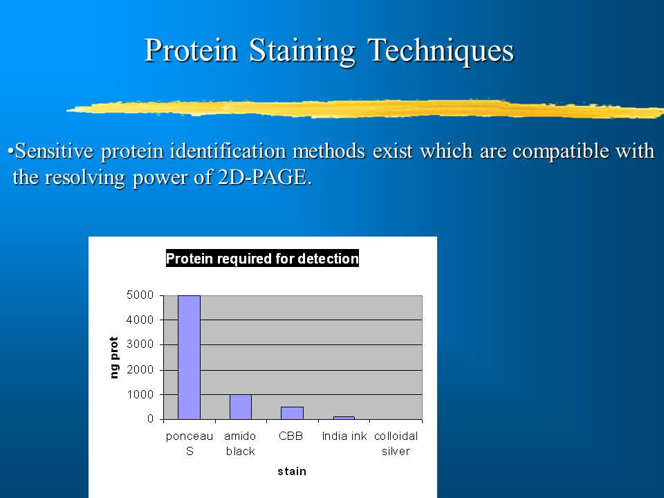 Protein Staining Techniques Sensitive protein identification methods exist which are compatible withSensitive protein identification methods exist whi