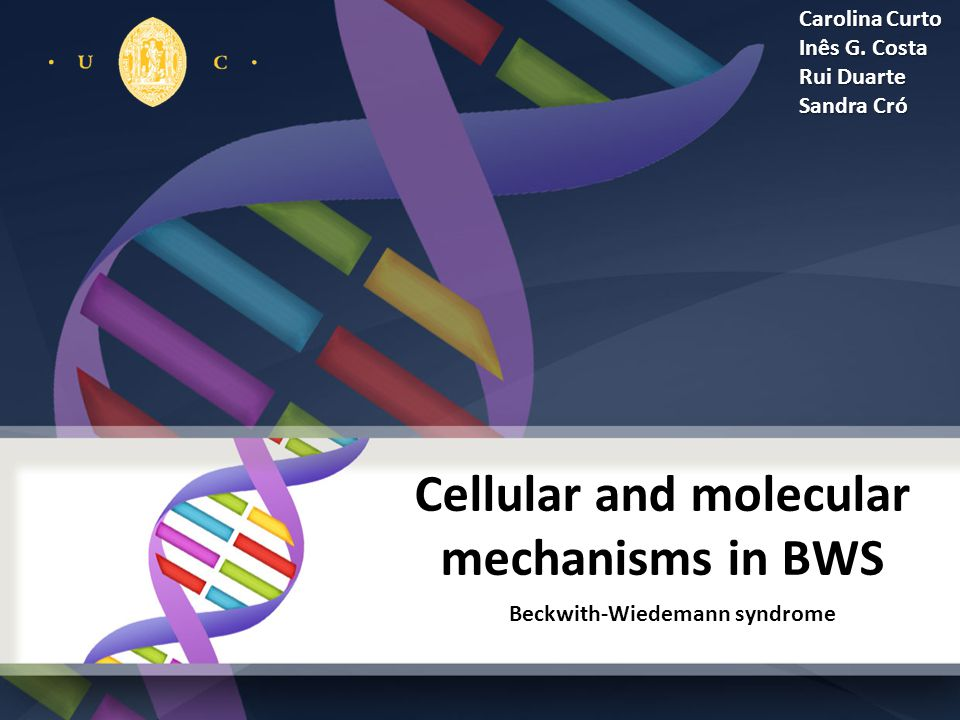 Cellular and molecular mechanisms in BWS Beckwith-Wiedemann syndrome Carolina Curto Inês G.
