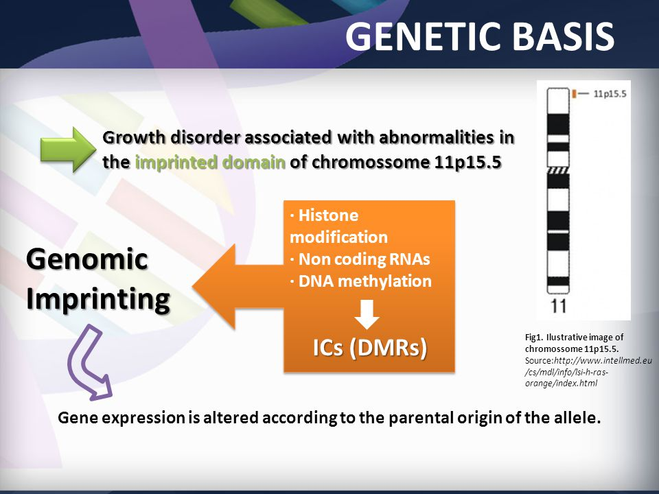 GENETIC BASIS · Histone modification · Non coding RNAs · DNA methylation ICs (DMRs) · Histone modification · Non coding RNAs · DNA methylation ICs (DMRs) Genomic Imprinting Fig1.