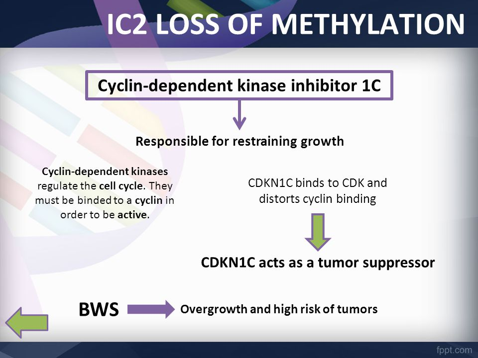 IC2 LOSS OF METHYLATION Cyclin-dependent kinase inhibitor 1C Responsible for restraining growth Cyclin-dependent kinases regulate the cell cycle.