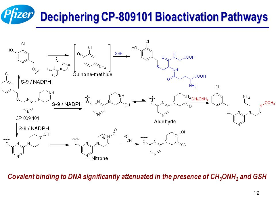 19 Deciphering CP-809101 Bioactivation Pathways Covalent binding to DNA significantly attenuated in the presence of CH 3 ONH 2 and GSH