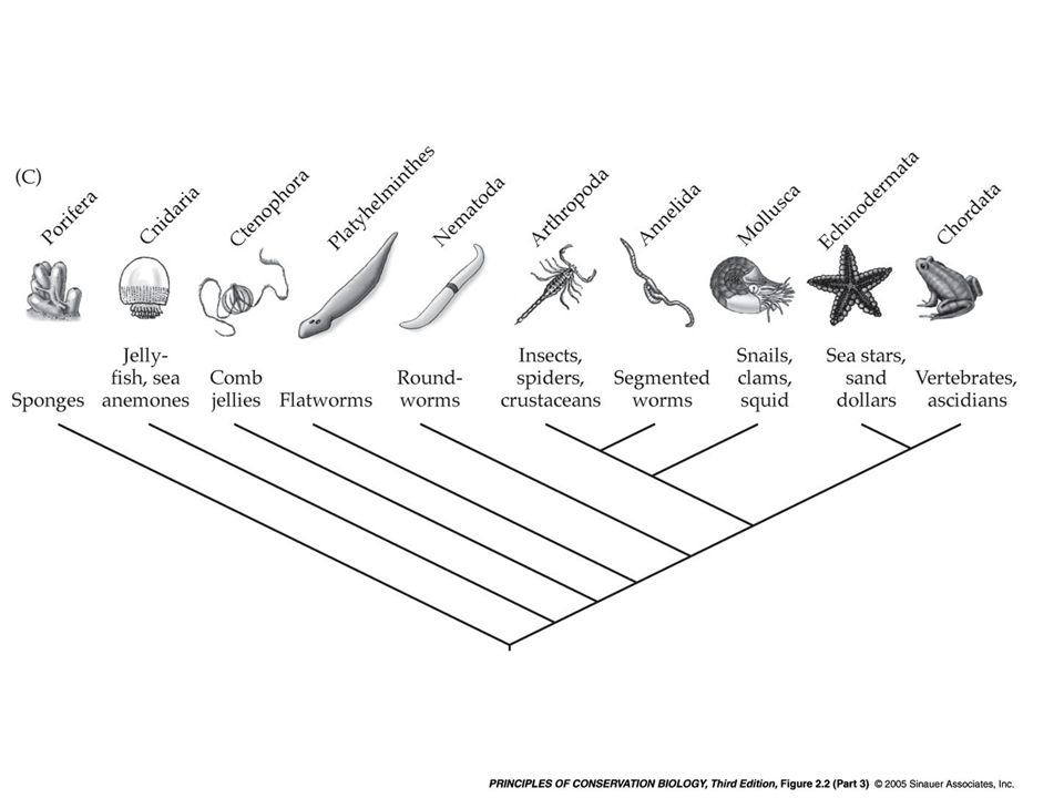 IV. Ecological components of biodiversity A.Functionality: