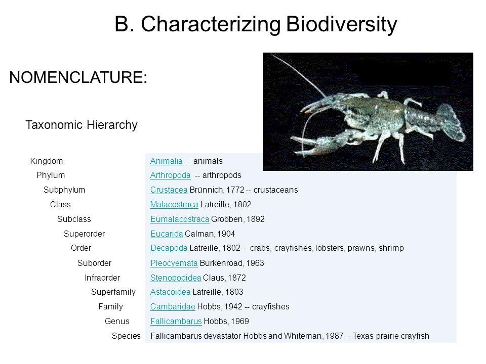 Taxonomic Hierarchy KingdomAnimaliaAnimalia -- animals PhylumArthropodaArthropoda -- arthropods SubphylumCrustaceaCrustacea Brünnich, 1772 -- crustace