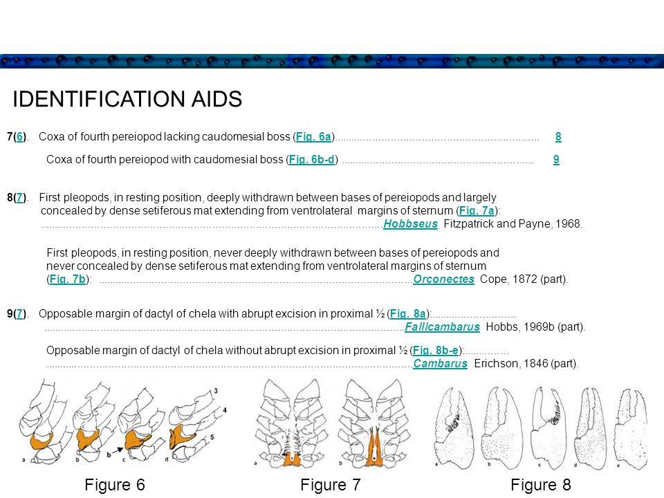 IDENTIFICATION AIDS 8(7).