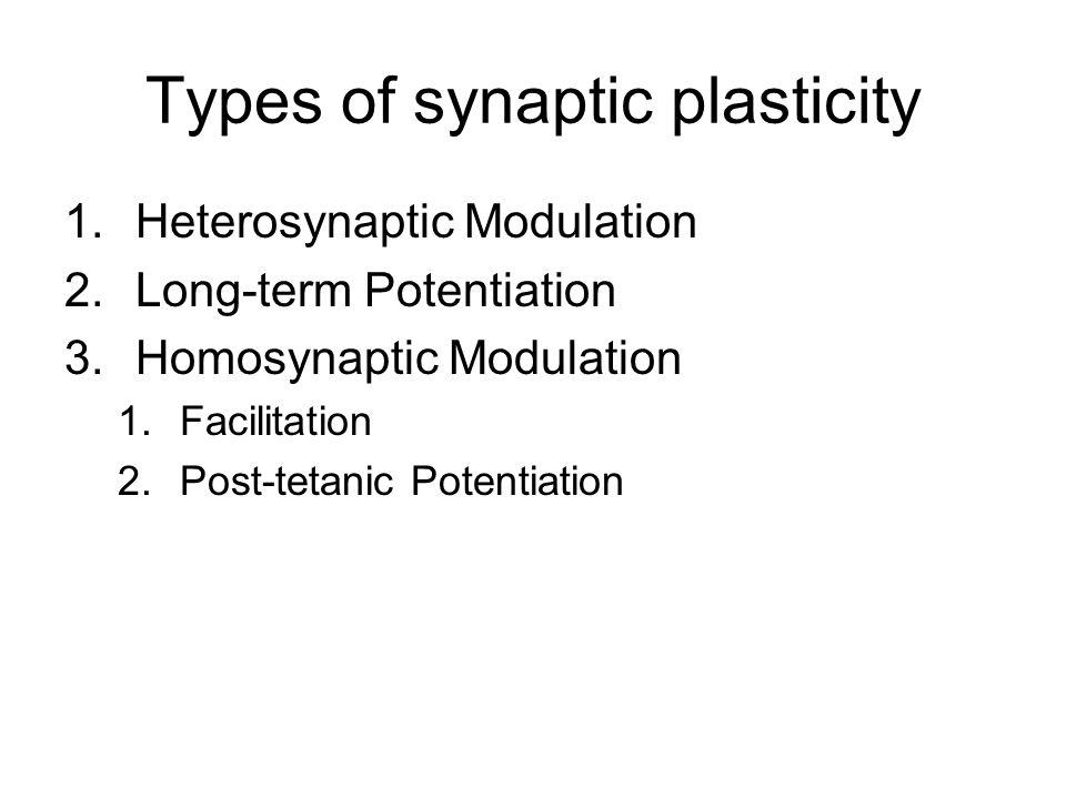Heterosynaptic facilitation Aplysia californica (sea slug)