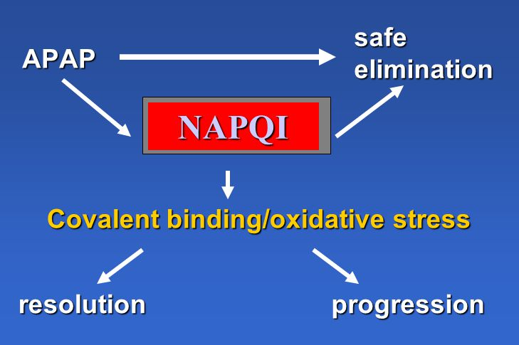 APAP safeelimination NAPQI Covalent binding/oxidative stress resolutionprogression