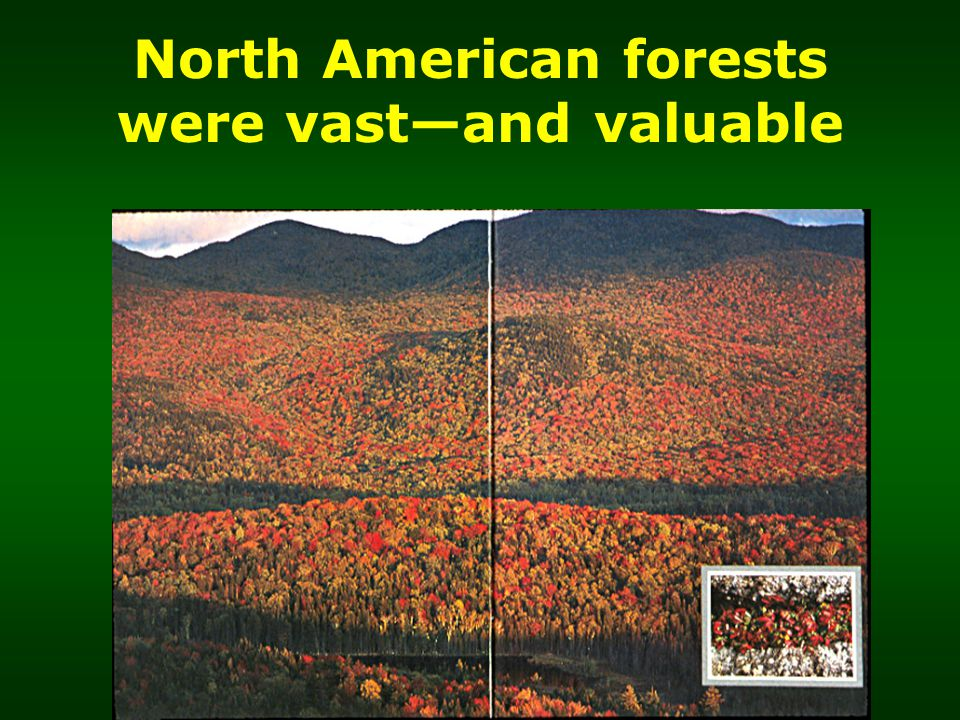 North American forests were vast—and valuable
