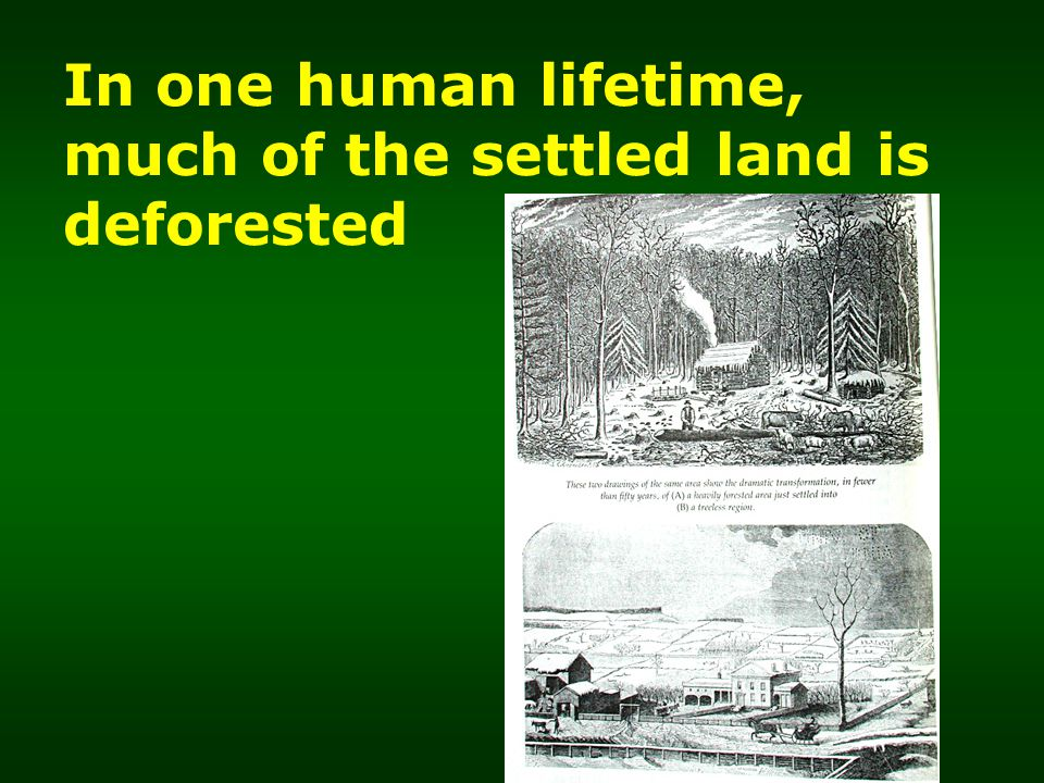 In one human lifetime, much of the settled land is deforested