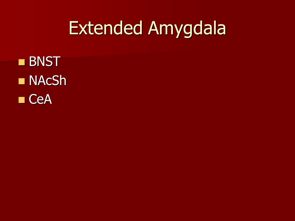 Extended Amygdala BNST BNST NAcSh NAcSh CeA CeA