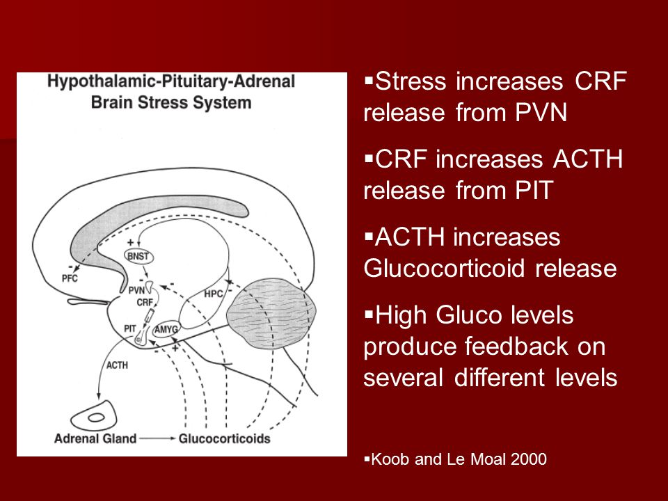  Stress increases CRF release from PVN  CRF increases ACTH release from PIT  ACTH increases Glucocorticoid release  High Gluco levels produce feedback on several different levels  Koob and Le Moal 2000